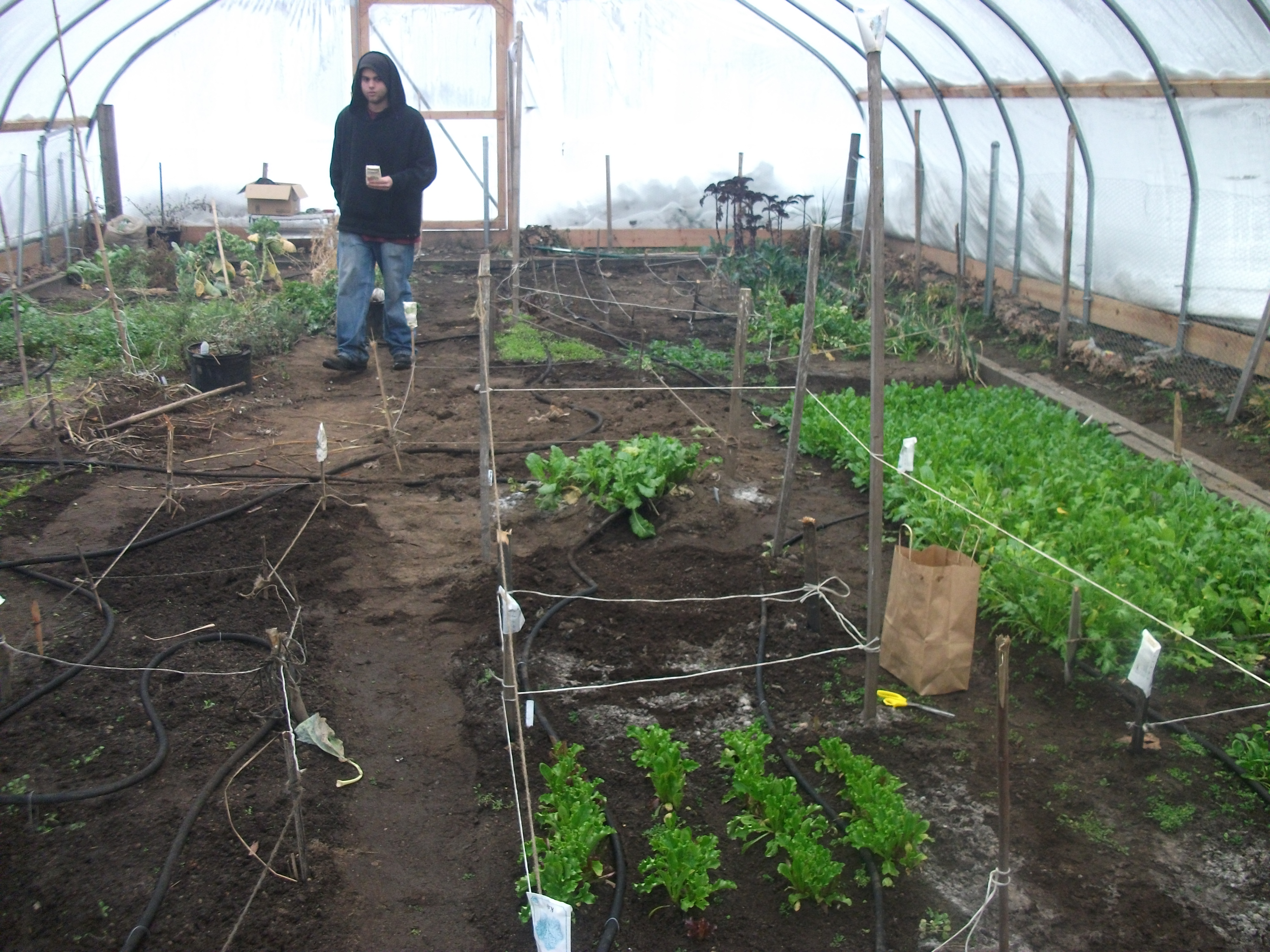 Winter Garden In Full Swing Fair Haven Community Health Center 39 S Diabetes Prevention Program